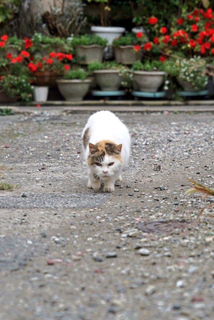 猫が向かってきた pic.twitter.com/HKQI5BBW0t