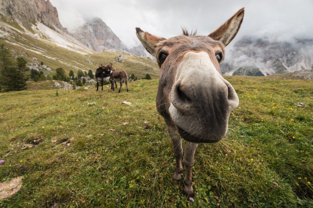 define donkey