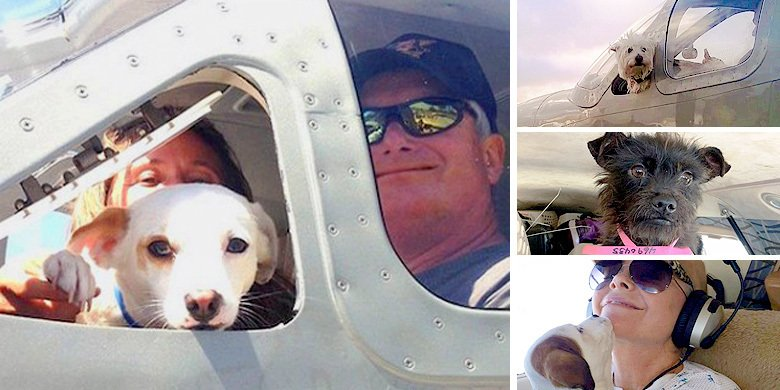 These Guys Are Angels - Pilots Go To Great Lengths To Find Shelter Dogs Facing Euthanasia … https://t.co/yICQRXYrl2 https://t.co/bhFyvMZk4c