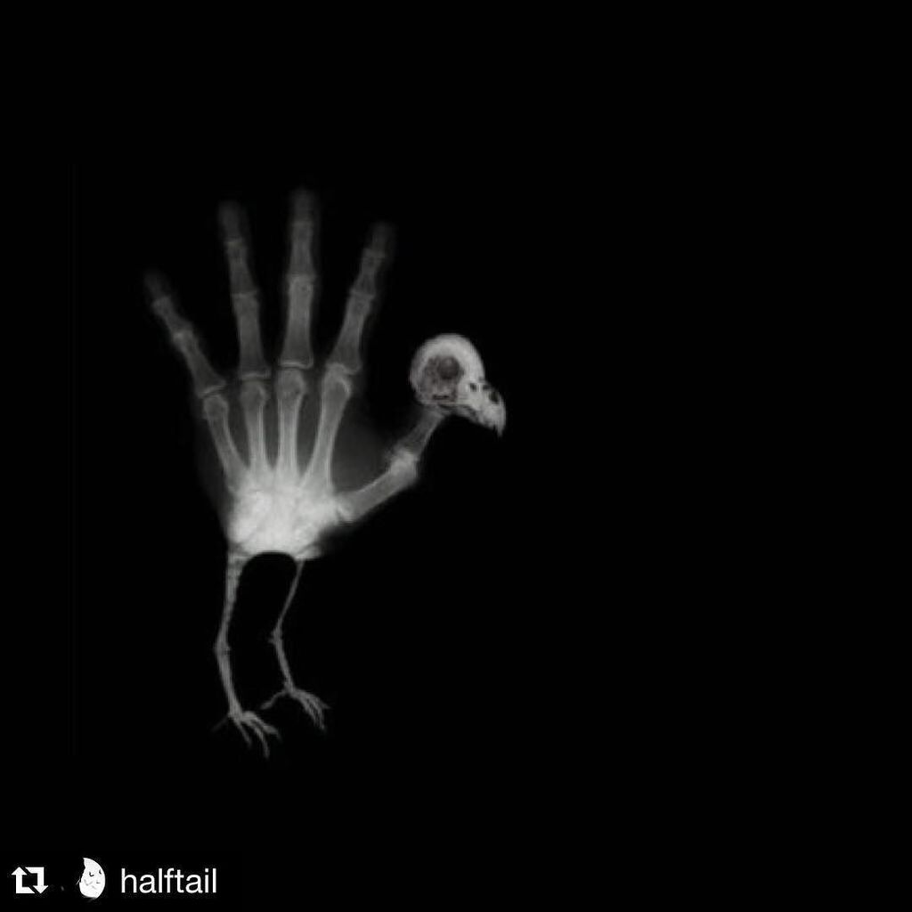happy turkey day #Repost @halftail https://t.co/7ttjVedHyf https://t.co/wMLxxE841i