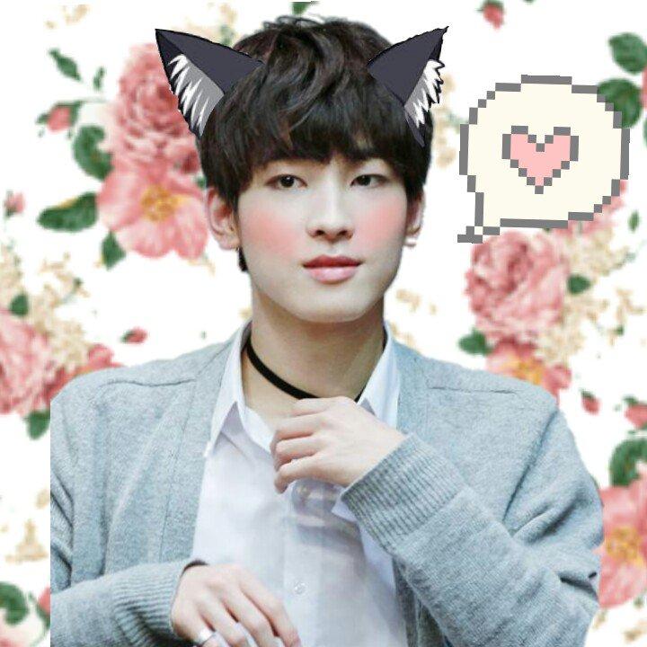 wonu || he loves kitties don't ask