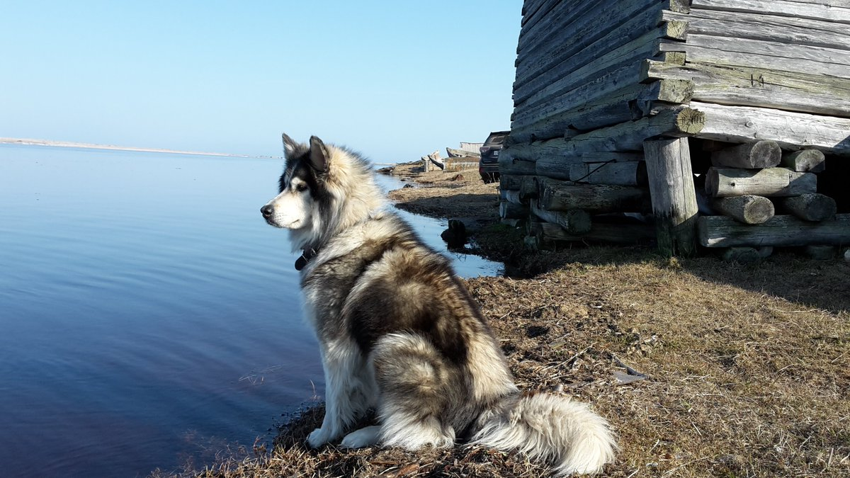 Отчёт о рыбалке на озере ик 2017 март