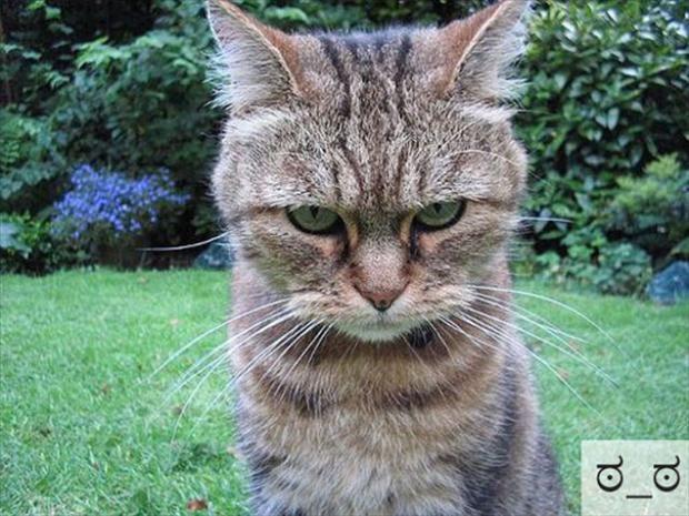 Divertenti gatti protagonisti della risoterapia