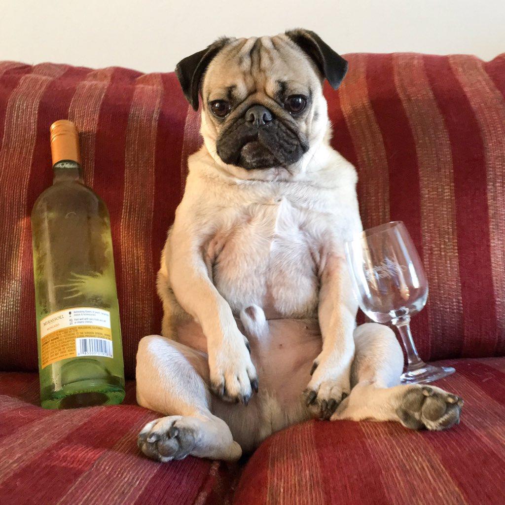 Doug The Pug On Twitter Im Always The Drunk Relative Httpstco