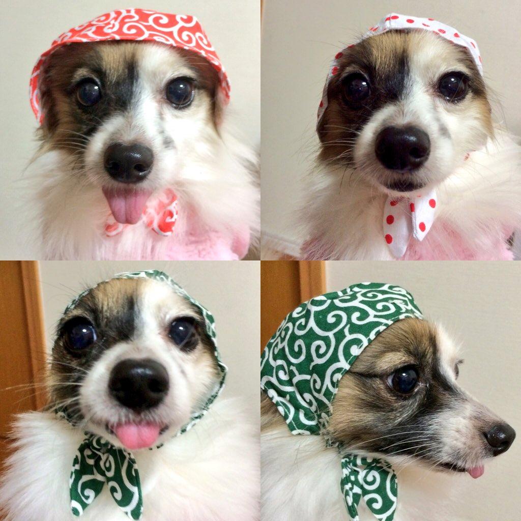 ねこ泥棒で泥棒犬  この顔見たらオヤツくだしゃい♡  美味しそうに食べますょ(*´艸`*)   #ねこ泥棒  #泥棒犬  #みんぺpic.twitter.com/tMovJgd5oG