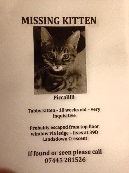 Cheltenham folk- look out for small tabby kitten - missing around Landsdown Crescent. Microchipped 10wks old. Pls RT https://t.co/yw87BsFjjI