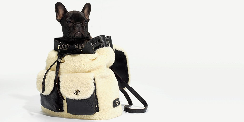 The cutest stowaway #CoachHoliday #CoachPups https://t.co/pVfY2EFyRr