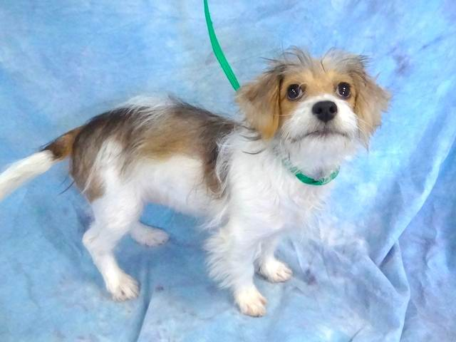 Pineapple is the Pet of the Day on the @ABC7 News at 11am! #adopt https://t.co/8Pzi1uDajT