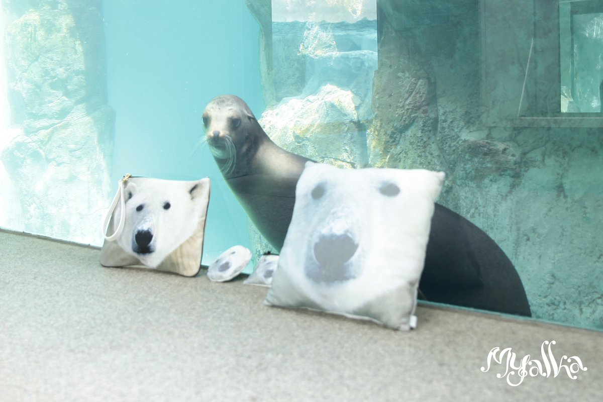 動物園 オンライン 上野