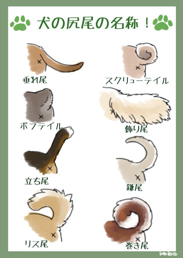 いくつ知ってる?ワンコの耳や尻尾の名称まとめ