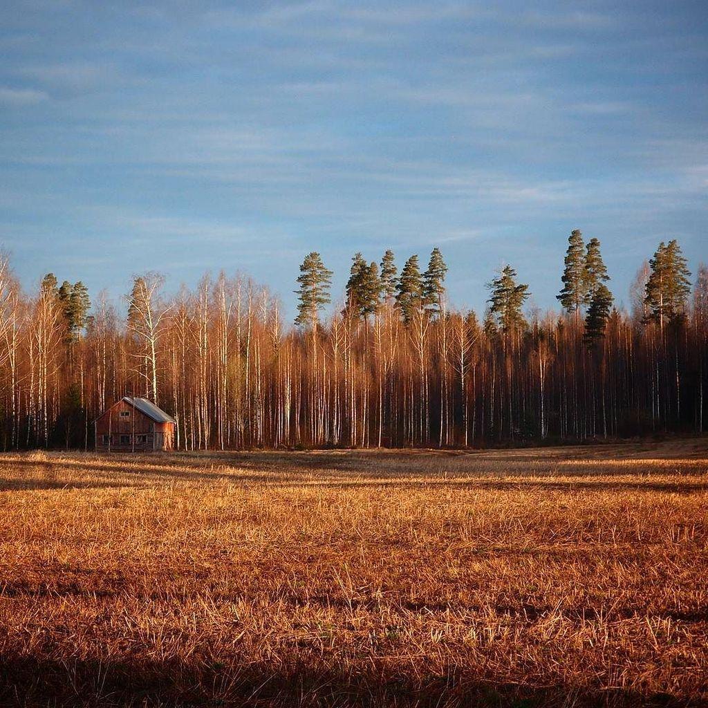 フィンランドの白樺林。なんでもない風景。 #フィンランド #白樺