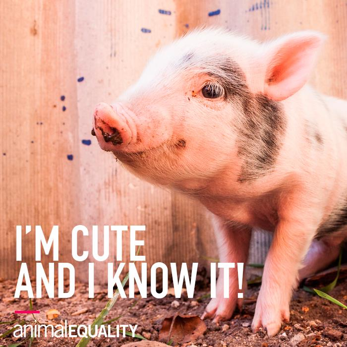 So cute!!!! RT @AnimalEquality: RT if you agree!