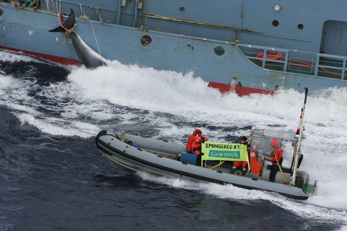 Giappone riprende la caccia alle balene nell'Artico