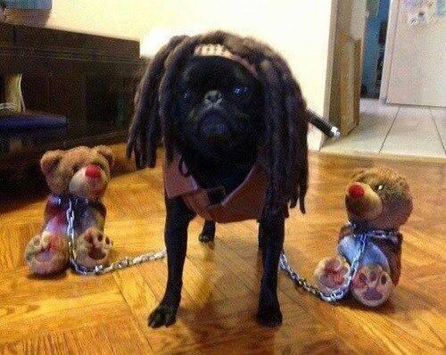 The Walking Pug https://t.co/tOkaByrygY