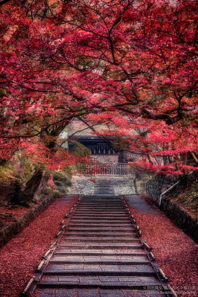 世界よ、これが京都の秋だ。あるいはそうだ京都行こう。1. 2015年朝、100mm2. 2014年夜、22mm3. 2013年夜、14mm4. 2012年朝、16mm#紅葉 #京都 #Nikon #東京カメラ部 pic.twitter.com/jVFZ278uOJ