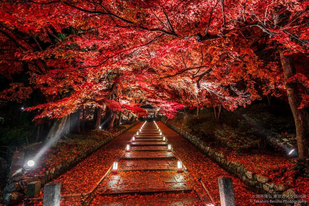 """""""深紅のじゅうたん""""のような京都の紅葉が美しすぎる!"""