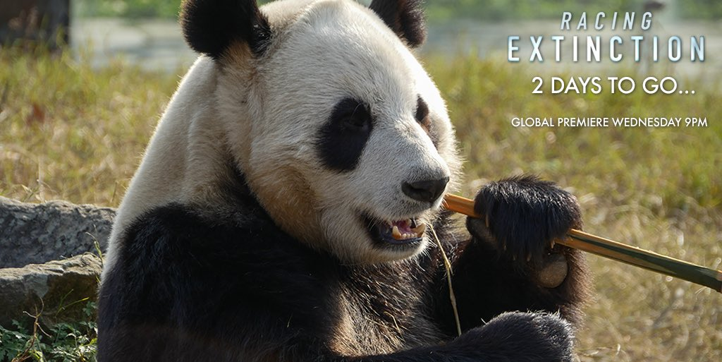RT @RacingXtinction: 2 days away! Watch #RacingExtinction this Wednesday on @discoverychannel #StartWith1Thing 🐼❤️ https://t.co/FageurKjMI