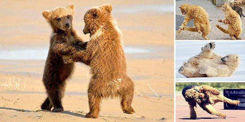 There's Nothing Like Cute Dancing Animals To Help You Start Off The Week On The Right Foot https://t.co/aP1lHUNKgy https://t.co/vp4OSHa3Fj
