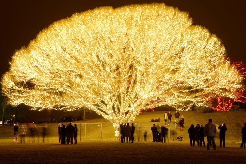Only in Utah >> The Tree of Life, done via Christmas lights (costs $40,000). #draperutah https://t.co/znjAmltog2