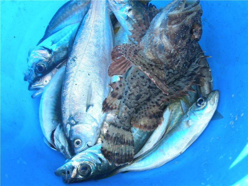 Отчёт о рыбалке в русской поляне омской области
