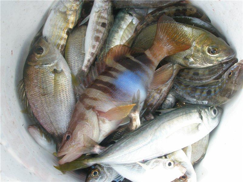 Отчет о рыбалке в решетниково