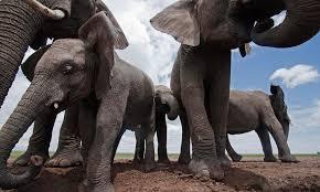 Multiple elephants! #EUML15 https://t.co/QCBd1X0rGL
