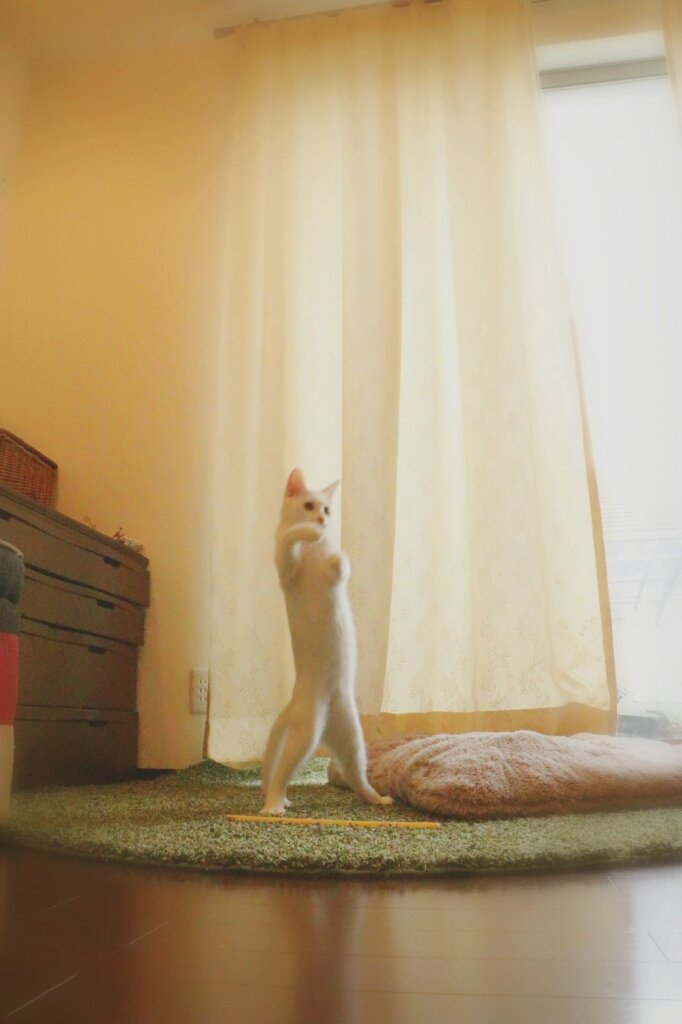 うちの猫。3ヶ月前と今の姿を見た方から「逆ライザップ」と、つぶやかれてしまいました(^_^;) pic.twitter.com/D3HOyJYqr5