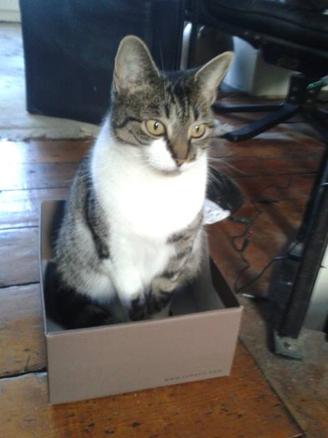 What's News Pussycat?: Information For My Cat - Shoebox https://t.co/ljBfYgPIm7 #cats https://t.co/i4wkBdBwzR