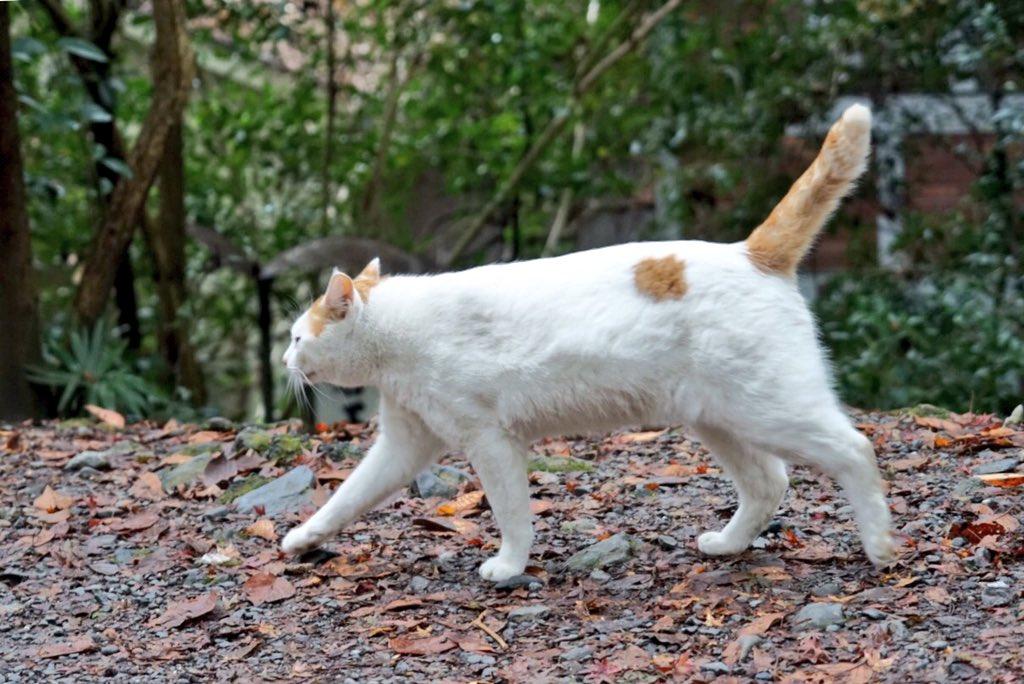 冬の小径で猫、伸びる pic.twitter.com/MqVXzWRcD0