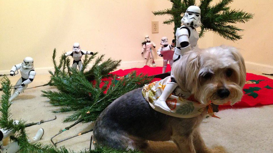 RT @mashable: An amy of stormtroopers help 'Star Wars' fan decorate for Christmas: https://t.co/uOYSvb1Az1 https://t.co/TGPBBqmQH7