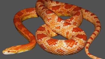 Snake insertion