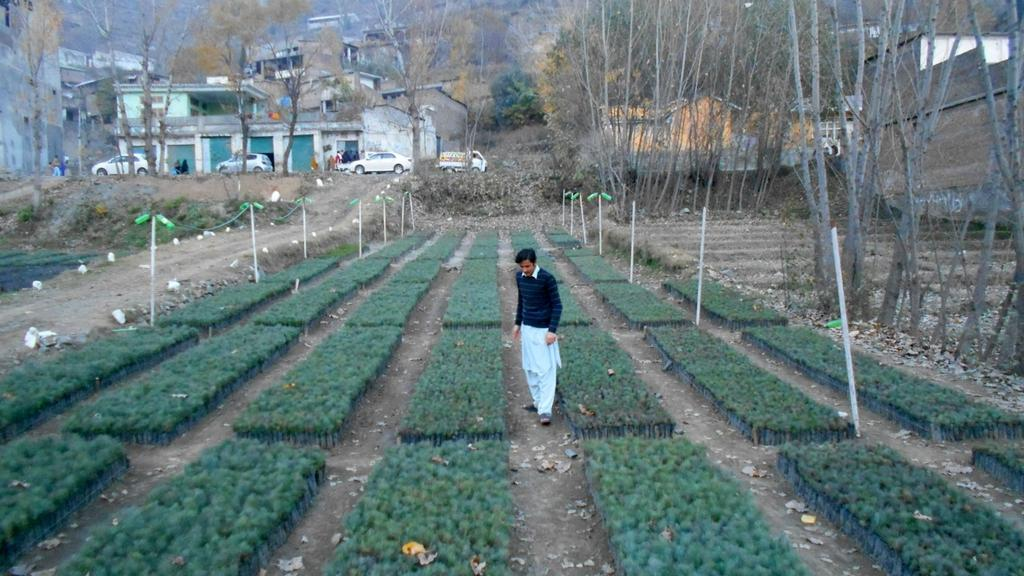 Plant Nursery Village Bedara District Swat Contributing To Billion Tree Tsunami Campaign In Kp Stan Cop21pic Twitter Qavewo1fwz