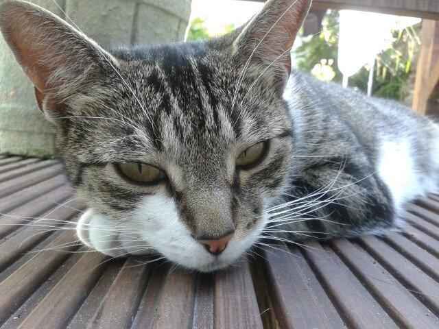 What's News Pussycat?: Ongoing Advice To My Cat - Bathroom Floor https://t.co/LaIMWdcmJD https://t.co/s6OHBUVsXT