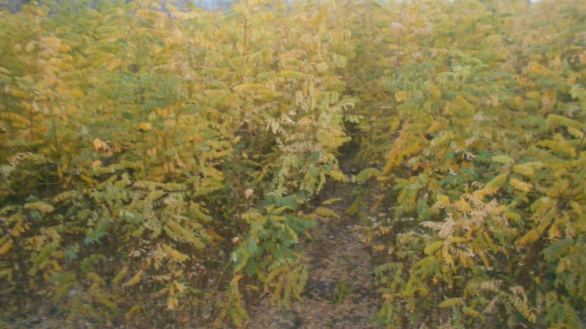 1 2 Plants Nursery In Drush Khela Matta Swat Contribution To Billion Tree Plantation Program Kp Stan Cop21pic Twitter 65ldsaedbz
