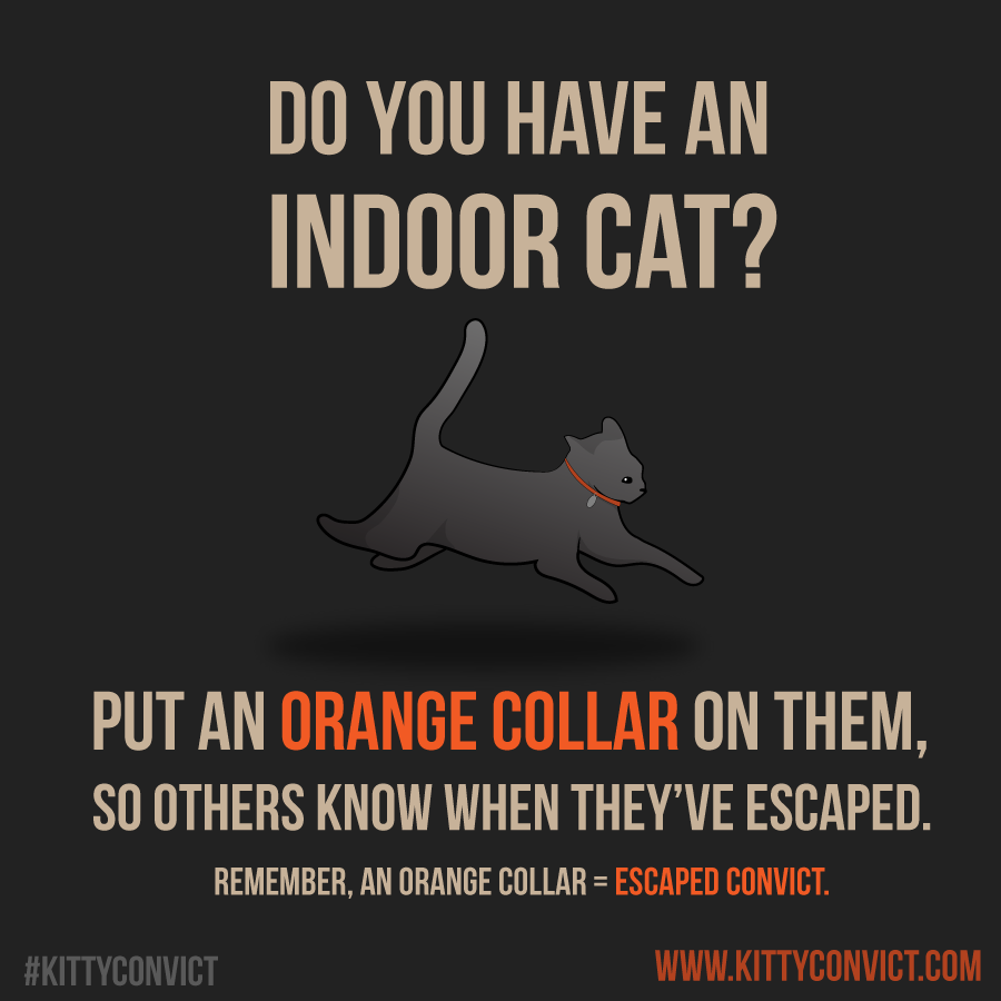 Is your cat a convict? Orange collar lets people know your cat belongs indoors #KittyConvict https://t.co/Lxc6aSodH2 https://t.co/kMUwCzpuuH