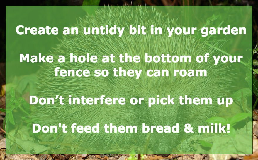 Want to help the humble hedgehog and it's declining numbers? Follow these tips and more with @hedgehogsociety #GQT https://t.co/zXFBU3zfl3