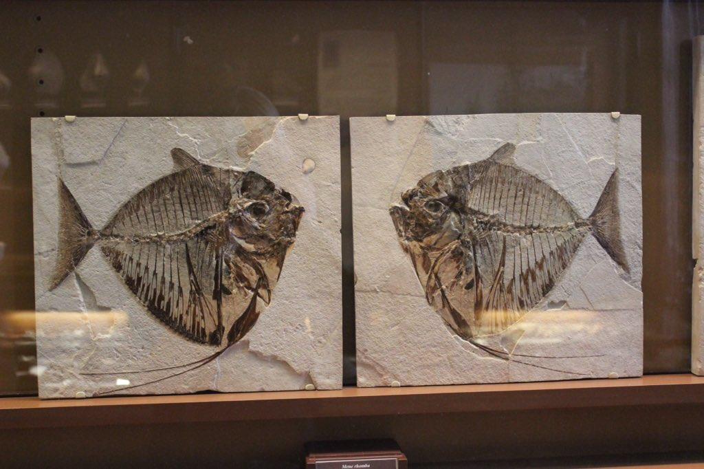 dating ihmisen fossiileja Aasian dating sites, jotka ovat 100 ilmaiseksi