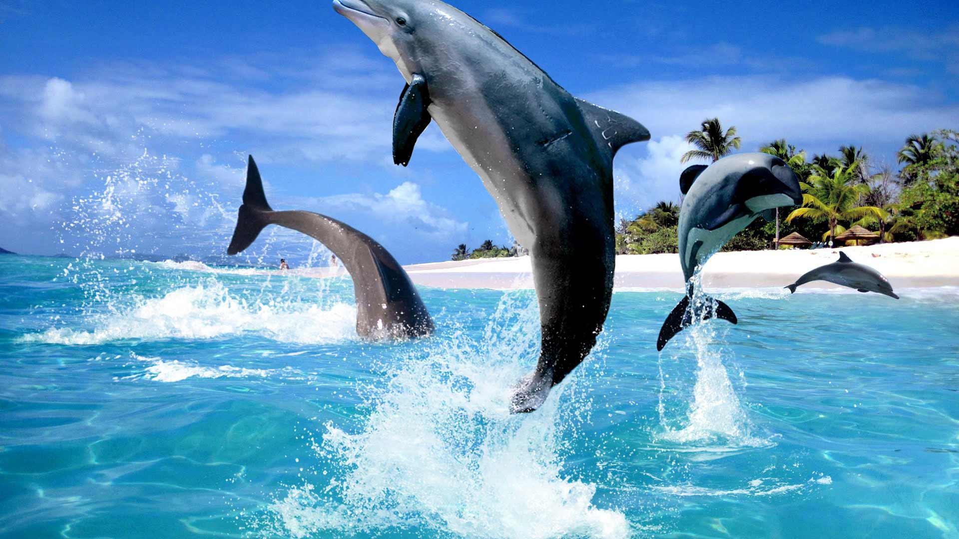 Картинки с дельфином в море, лету