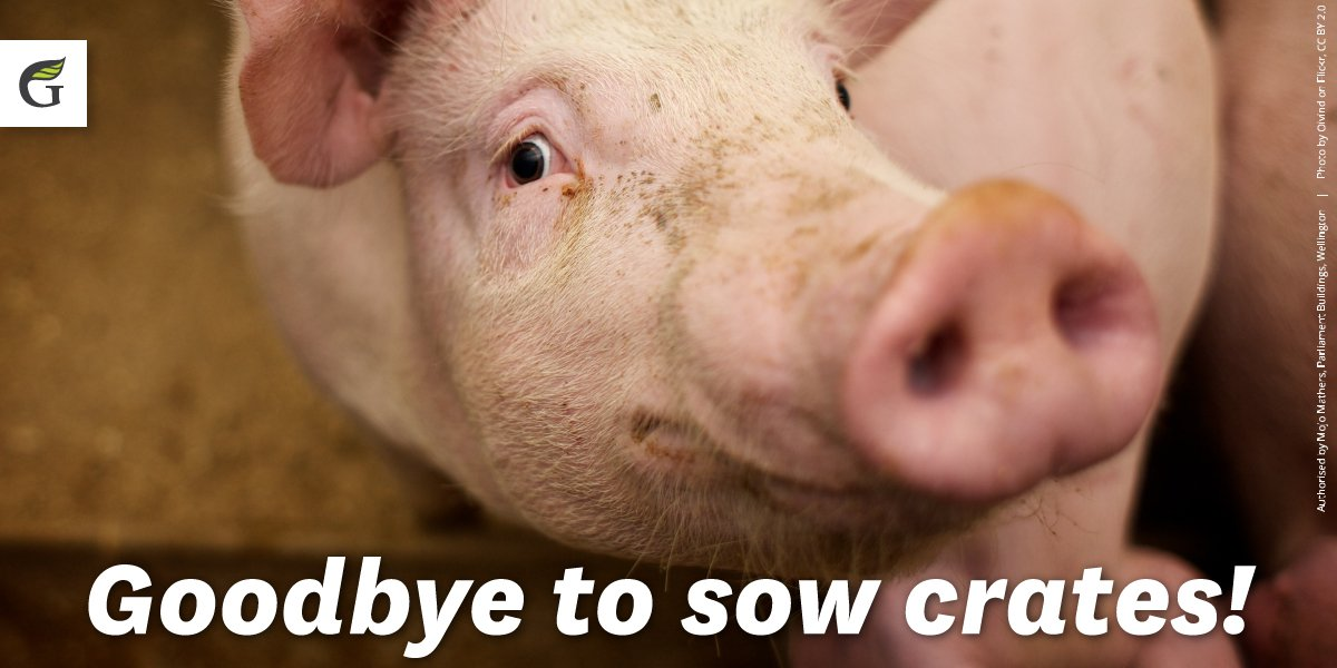 This is kind of a pig deal! From today onwards, cruel and cramped sow crates are illegal in New Zealand. https://t.co/mkc1ikSBid
