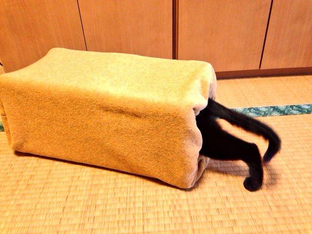 寒くなったので、ねこの寝床を作りました。なんか食パンに飛び込んでるみたいだなー。 https://t.co/nRD8TeQoxx