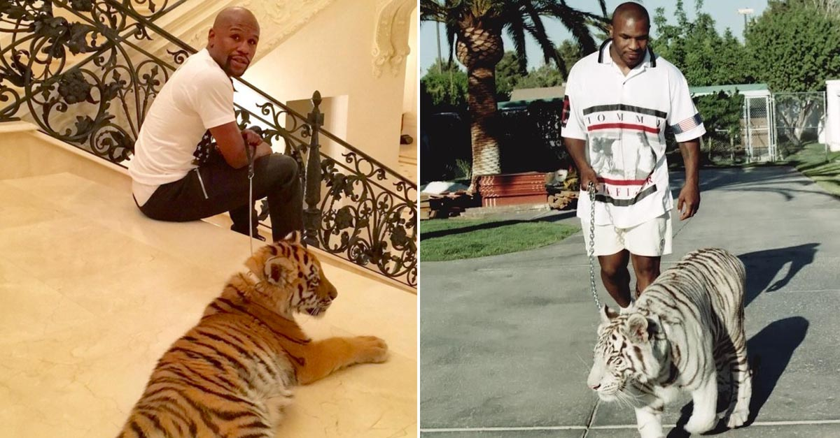 Mike Tyson Baby Tiger