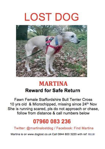 Please keep eyes open for @martinalostdog and please rt #uppernorwood #sydenham #streatham #tulsehill. #SE22 #SW2