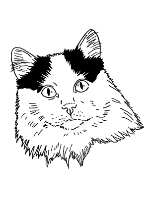 tabby tracker on twitter lost cat kiss kiss in kenosha wi us Cats and Dogs Wallpaper 5 20 pm 11 dec 2015