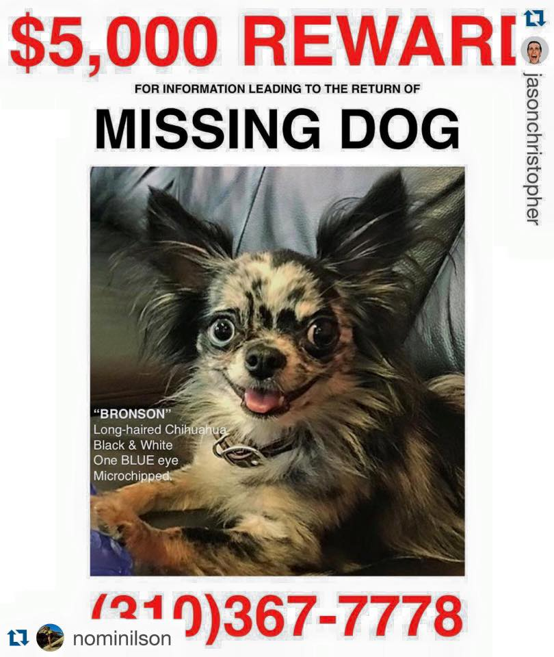 $5,000 REWARD. #LostDog #LA #WestHollywood More info here: https://t.co/deRhwiOsus https://t.co/vBvFt6Zg1D