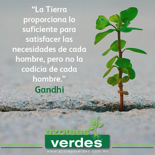 Azoteas Verdes En Twitter Quote Frases Gandhi