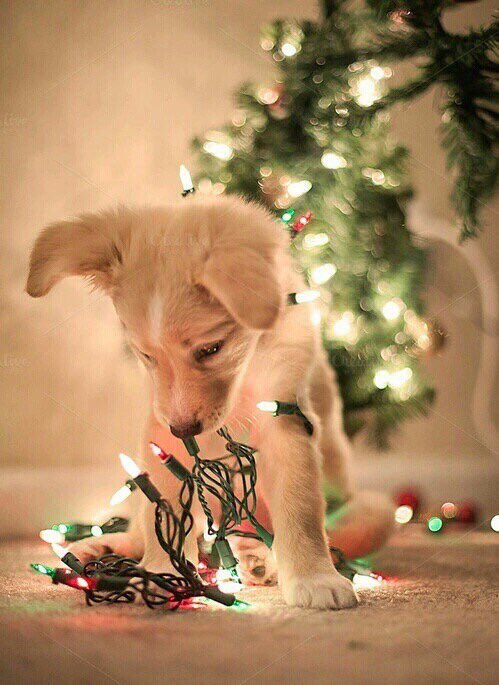 I need a puppy for Christmas 😍