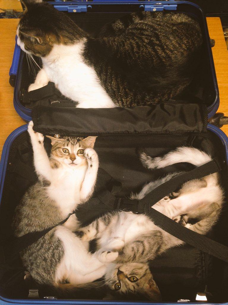 「全日本スーツケースに荷物詰め込ませたくない連盟」の方々。
