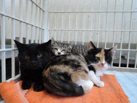 犬猫救済の輪さんhttps://t.co/QPVbhX861K ★茨城県動物指導センター譲渡団体になり、団体登録を完了★ 多くの子たちの引き出しをしています。どうか皆様お力をお貸し下さい。 放棄の子たち7匹引き出し予定。老犬も・・ https://t.co/K2GPyAc4Ws