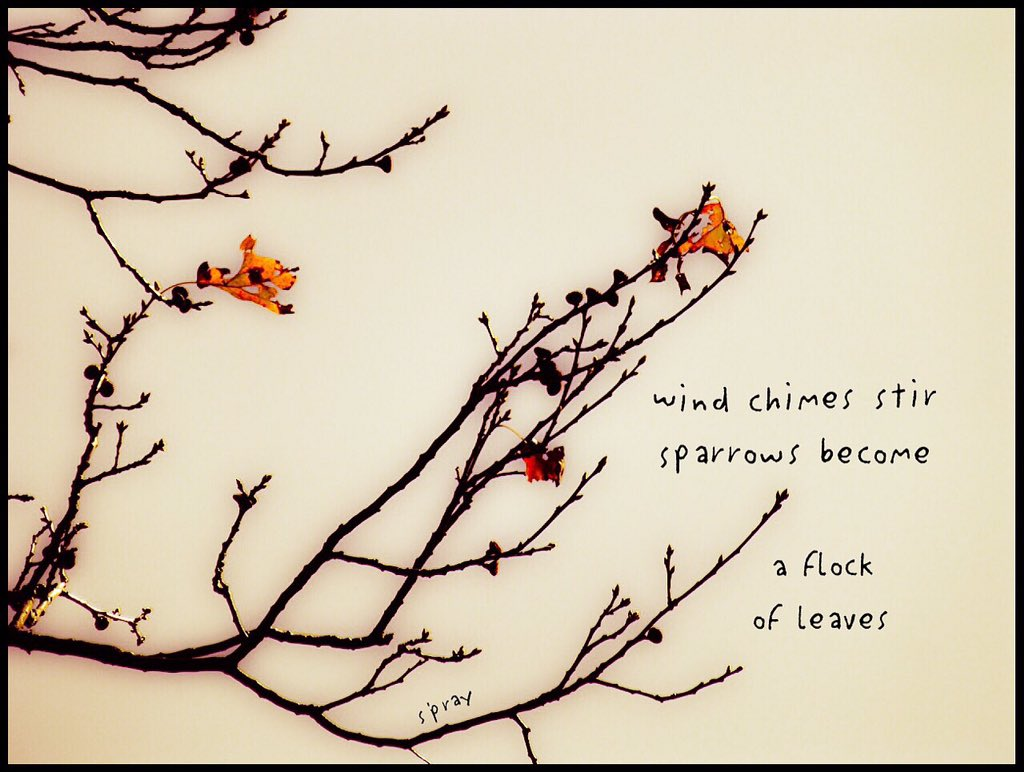 wind chimes stir sparrows become a flock of leaves #haiku #nahaiwrimo https://t.co/uOQn3TlnZC
