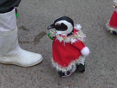 甘えたいお年頃かわいい衣装を見に来て下さいね。キラキラモフモフがついているうちに…!(ペンギンがブチッと取ってしまうので…) pic.twitter.com/qy2uMrXjWb